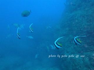 f:id:polepole-at-sea:20180113215507j:plain