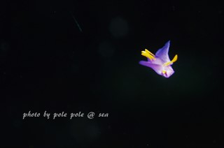 f:id:polepole-at-sea:20180419085530j:plain