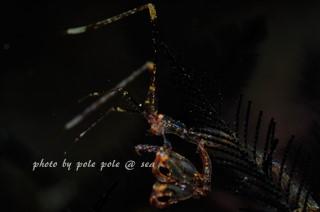 f:id:polepole-at-sea:20180419085630j:plain
