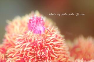 f:id:polepole-at-sea:20180421000912j:plain