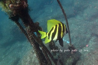 f:id:polepole-at-sea:20180422002606j:plain