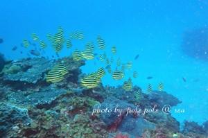 f:id:polepole-at-sea:20180728222154j:plain