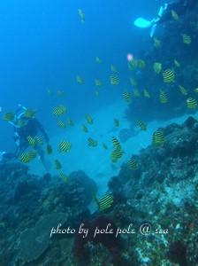 f:id:polepole-at-sea:20180806010026j:plain