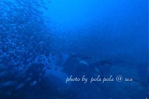 f:id:polepole-at-sea:20180812005347j:plain