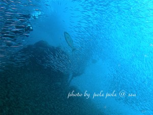 f:id:polepole-at-sea:20180924230635j:plain