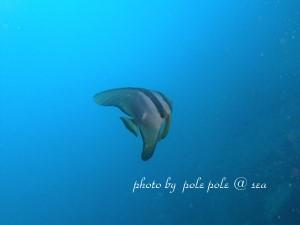 f:id:polepole-at-sea:20180924230736j:plain