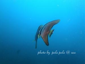 f:id:polepole-at-sea:20180924230756j:plain