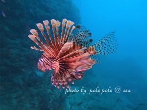f:id:polepole-at-sea:20180926221551j:plain
