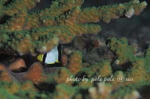 f:id:polepole-at-sea:20181105193443j:plain