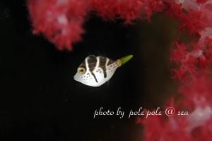f:id:polepole-at-sea:20181105194321j:plain