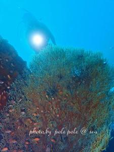 f:id:polepole-at-sea:20181111222540j:plain