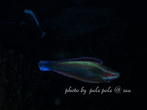 f:id:polepole-at-sea:20181122224003j:plain