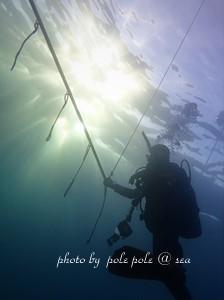 f:id:polepole-at-sea:20181122224554j:plain