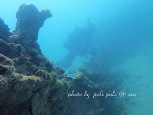 f:id:polepole-at-sea:20181208224705j:plain