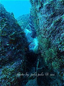 f:id:polepole-at-sea:20190224190337j:plain