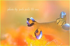 f:id:polepole-at-sea:20190320102605j:plain