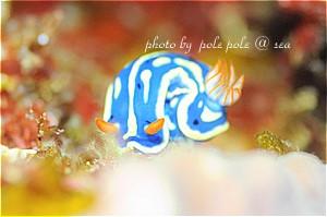 f:id:polepole-at-sea:20190410085057j:plain