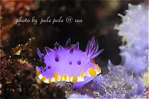 f:id:polepole-at-sea:20190410085745j:plain