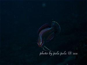 f:id:polepole-at-sea:20190422002020j:plain