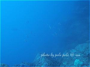 f:id:polepole-at-sea:20190428184618j:plain