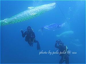 f:id:polepole-at-sea:20190505002545j:plain