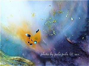 f:id:polepole-at-sea:20190505005412j:plain