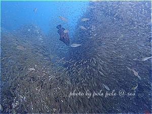 f:id:polepole-at-sea:20190721230339j:plain