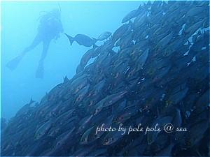 f:id:polepole-at-sea:20190729211548j:plain