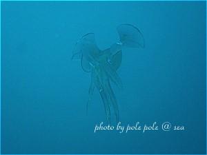 f:id:polepole-at-sea:20190730213857j:plain