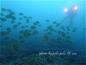 f:id:polepole-at-sea:20190730214027j:plain