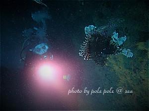 f:id:polepole-at-sea:20190907224718j:plain