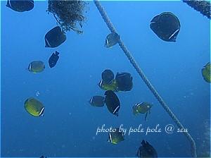 f:id:polepole-at-sea:20190910225707j:plain