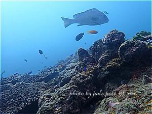 f:id:polepole-at-sea:20190914222848j:plain