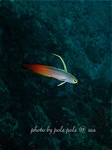 f:id:polepole-at-sea:20190917004510j:plain