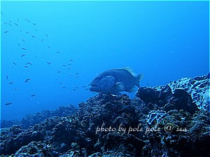 f:id:polepole-at-sea:20190919233915j:plain