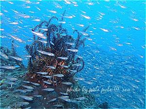 f:id:polepole-at-sea:20190927184311j:plain