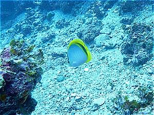 f:id:polepole-at-sea:20190929234858j:plain