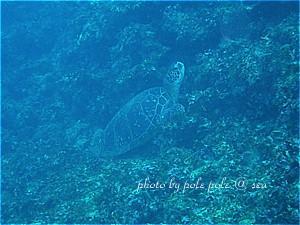 f:id:polepole-at-sea:20190929235035j:plain
