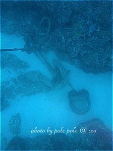 f:id:polepole-at-sea:20191026222236j:plain