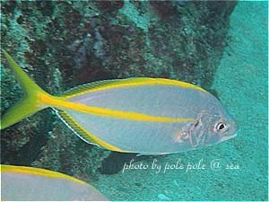 f:id:polepole-at-sea:20191026222434j:plain