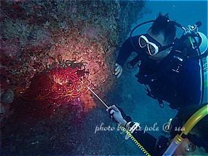 f:id:polepole-at-sea:20191028141035j:plain