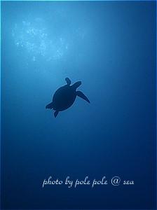 f:id:polepole-at-sea:20191116192608j:plain
