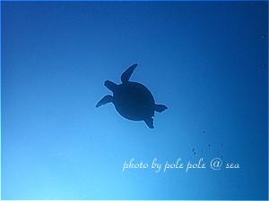 f:id:polepole-at-sea:20191116192756j:plain