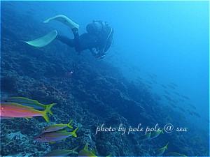 f:id:polepole-at-sea:20191116193000j:plain