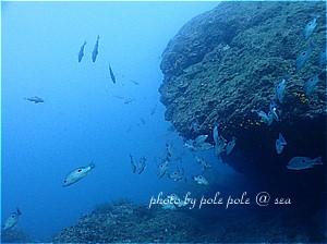 f:id:polepole-at-sea:20191123221932j:plain