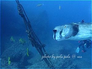 f:id:polepole-at-sea:20191123222144j:plain