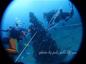 f:id:polepole-at-sea:20191128085944j:plain