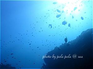 f:id:polepole-at-sea:20191129202111j:plain