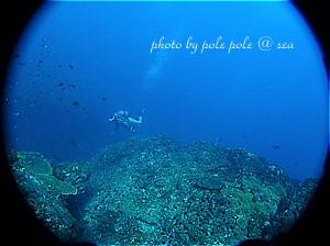 f:id:polepole-at-sea:20191129202153j:plain