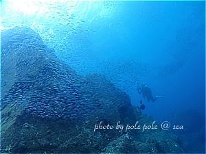 f:id:polepole-at-sea:20191208000334j:plain
